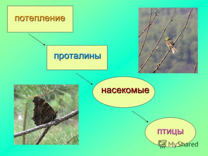 потепление проталины насекомые птицы