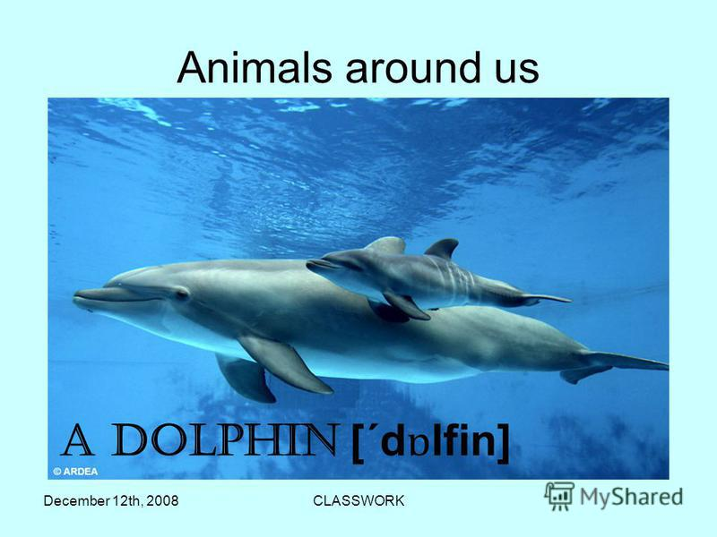 December 12th, 2008CLASSWORK Аnimals around us A Dolphin [´d ɒ lfin]