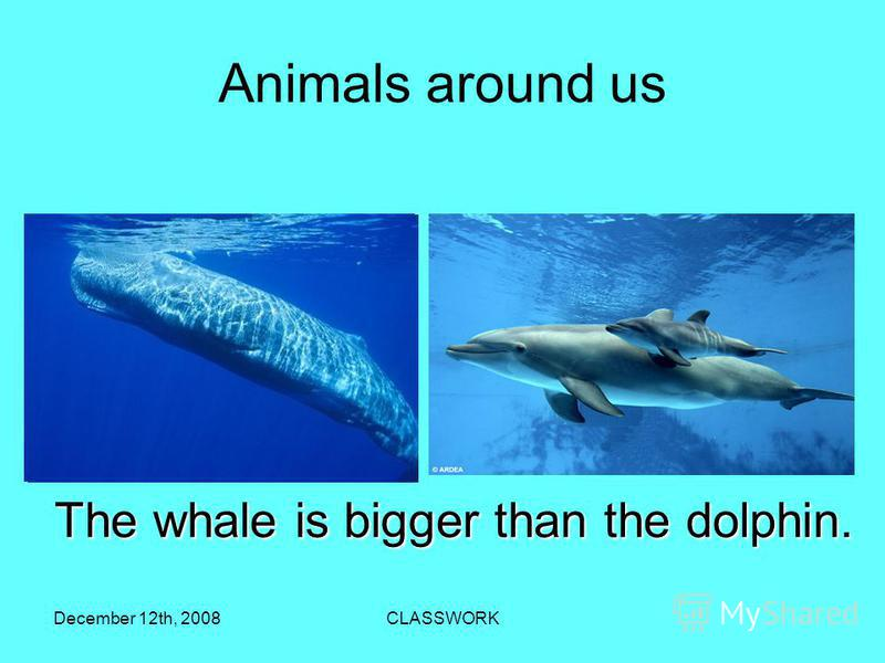 December 12th, 2008CLASSWORK Аnimals around us The whale is bigger than the dolphin.