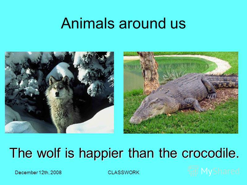 December 12th, 2008CLASSWORK Аnimals around us 5 The wolf is happier than the crocodile.