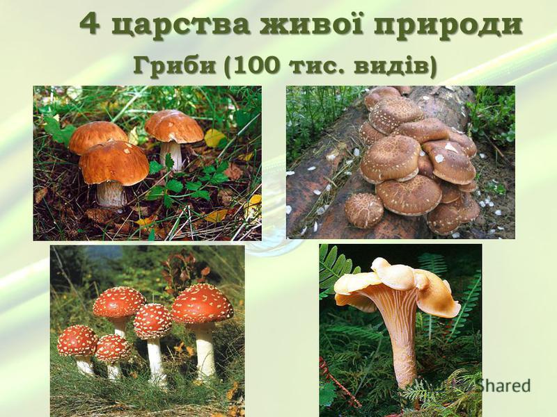 4 царства живої природи Гриби (100 тис. видів)