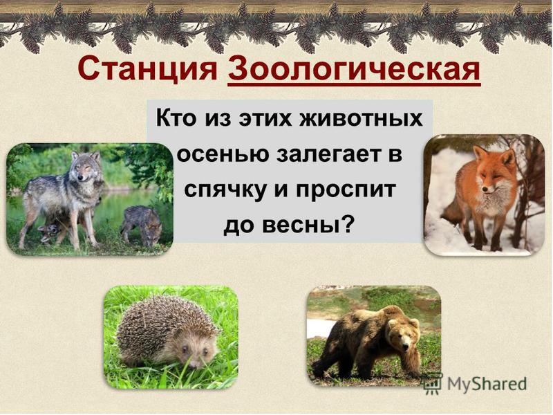 Станция Зоологическая Кто из этих животных осенью залегает в спячку и проспит до весны?