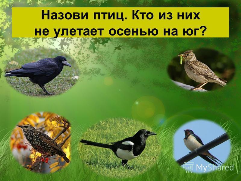 Назови птиц. Кто из них не улетает осенью на юг?