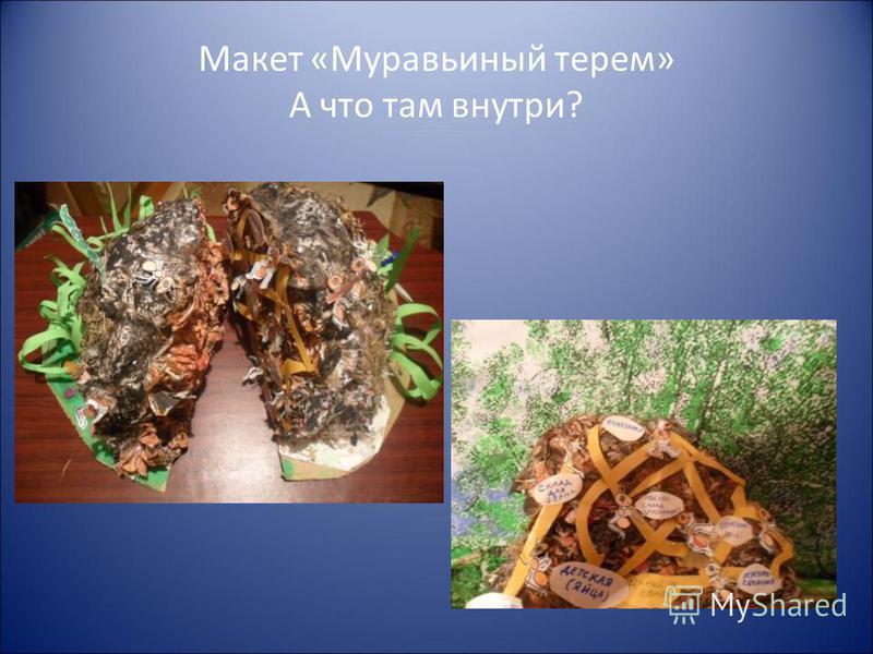 Макет «Муравьиный терем» А что там внутри?