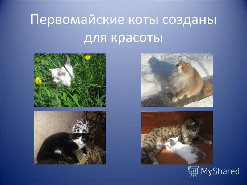 Первомайские коты созданы для красоты