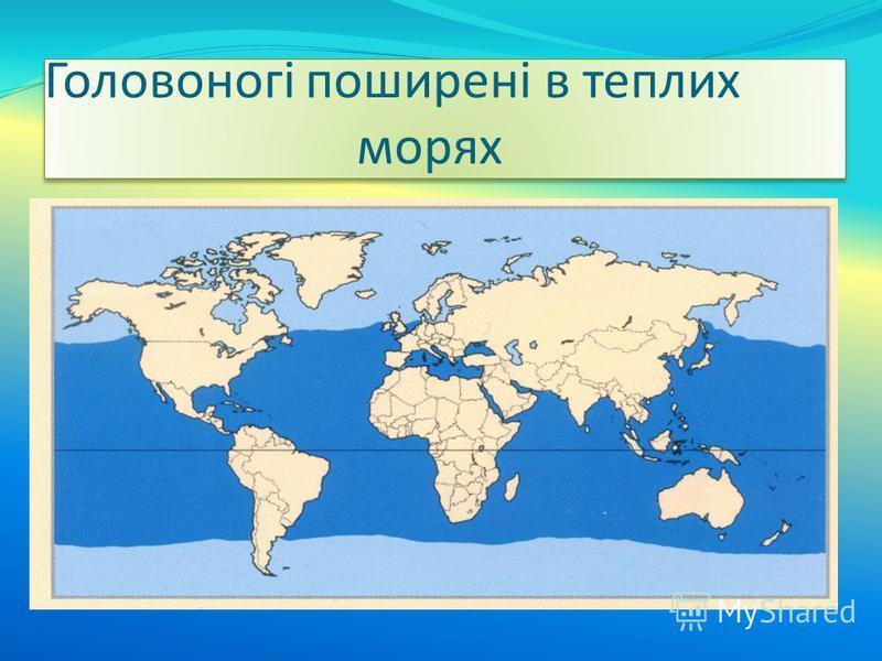 Головоногі поширені в теплих морях