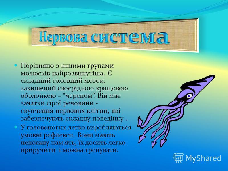 Порівняно з іншими групами молюсків найрозвинутіша. Є складний головний мозок, захищений своєрідною хрящовою оболонкою – черепом. Він має зачатки сірої речовини - скупчення нервових клітин, які забезпечують складну поведінку. У головоногих легко виро