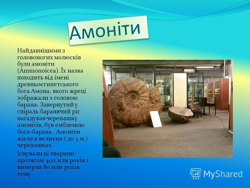 Амоніти Найдавнішими з головоногих молюсків були амоніти (Ammonoicea). Їх назва походить від імені древньоєгипетського бога Амона, якого жреці зображали з головою барана. Завернутий у спіраль баранячий ріг нагадував черепашку амонітів, був емблемою б