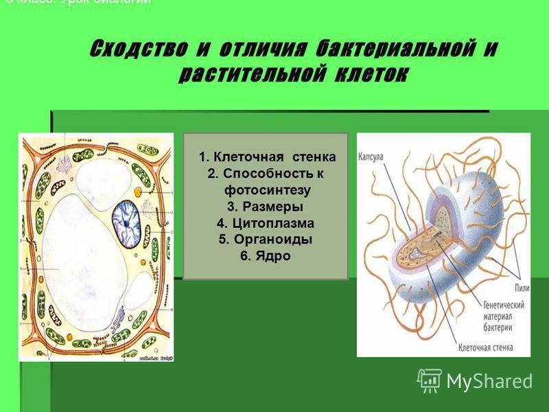 6 класс. Урок биологии 1. Клеточная стенка 2. Способность к фотосинтезу 3. Размеры 4. Цитоплазма 5. Органоиды 6. Ядро