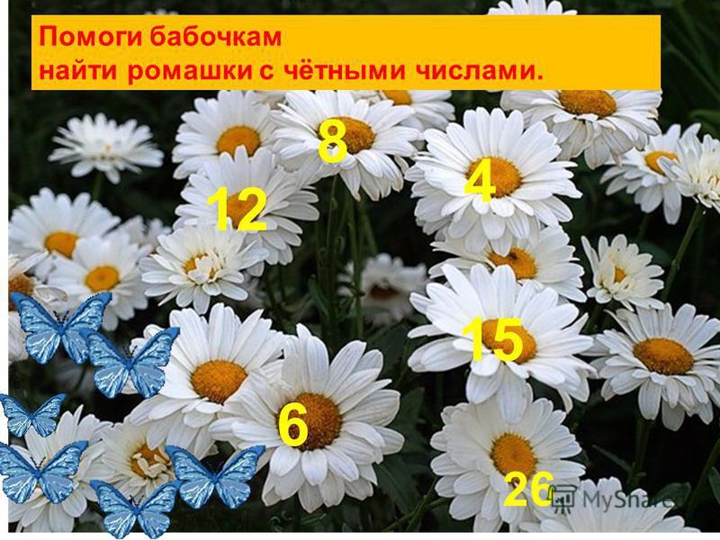 Помоги бабочкам найти ромашки с чётными числами. 6 15 4 8 12 26