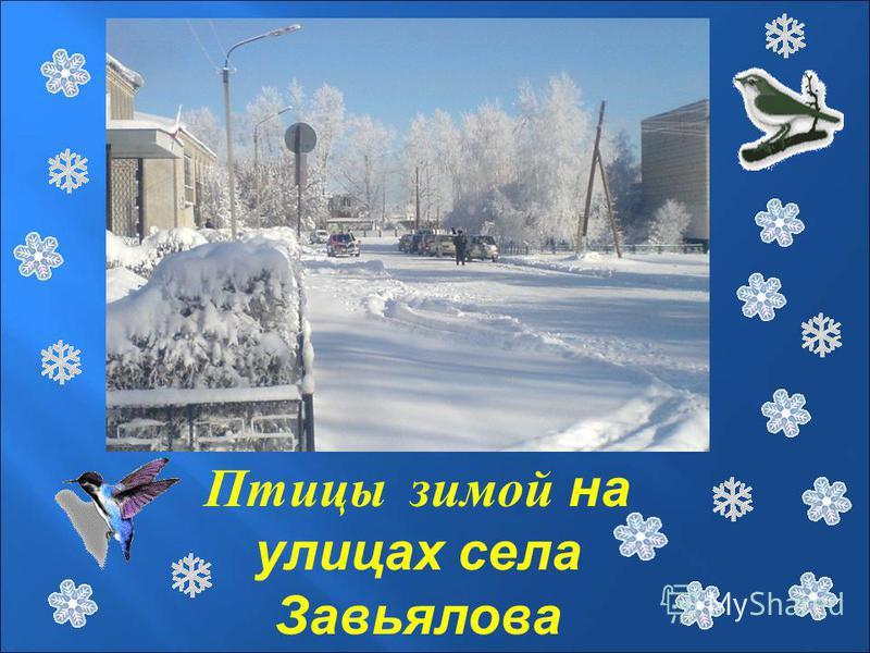 Птицы зимой на улицах села Завьялова