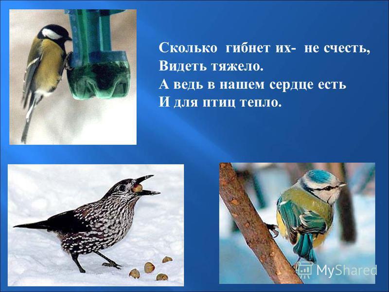 Сколько гибнет их- не счесть, Видеть тяжело. А ведь в нашем сердце есть И для птиц тепло.