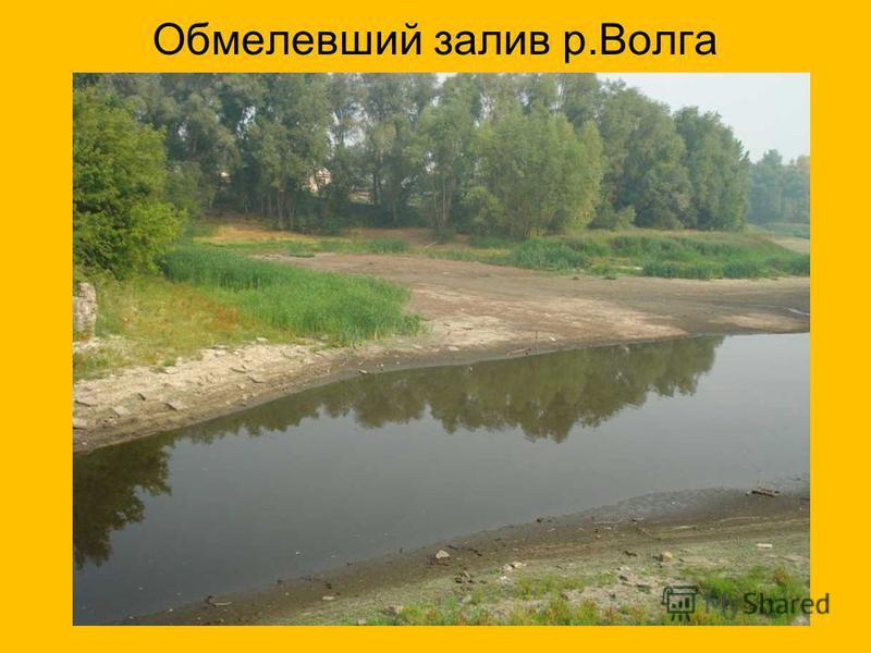 Обмелевший залив р.Волга