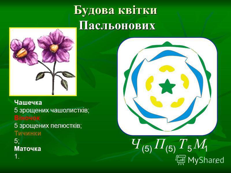 3 Будова квітки Пасльонових Чашечка 5 зрощених чашолистків; Віночок 5 зрощених пелюстків; Тичинки 5; Маточка 1. 1 М 5 Т (5) П Ч