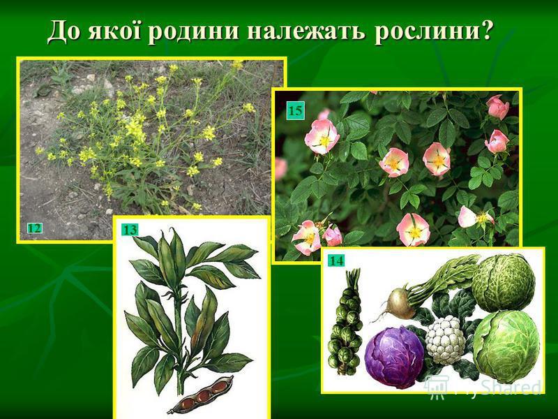 До якої родини належать рослини? 12 15 13 414