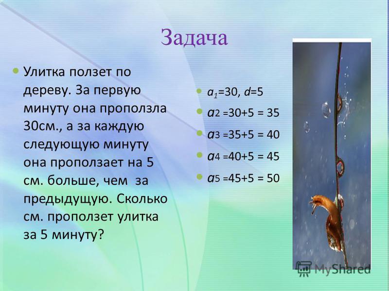 Задача Улитка ползет по дереву. За первую минуту она проползла 30 см., а за каждую следующую минуту она проползает на 5 см. больше, чем за предыдущую. Сколько см. проползет улитка за 5 минуту? a 1 =30, d=5 а 2 = 30+5 = 35 а 3 = 35+5 = 40 а 4 = 40+5 =