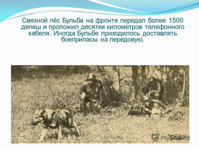 Связной пёс Бульба на фронте передал более 1500 депеш и проложил десятки километров телефонного кабеля. Иногда Бульбе приходилось доставлять боеприпасы на передовую.