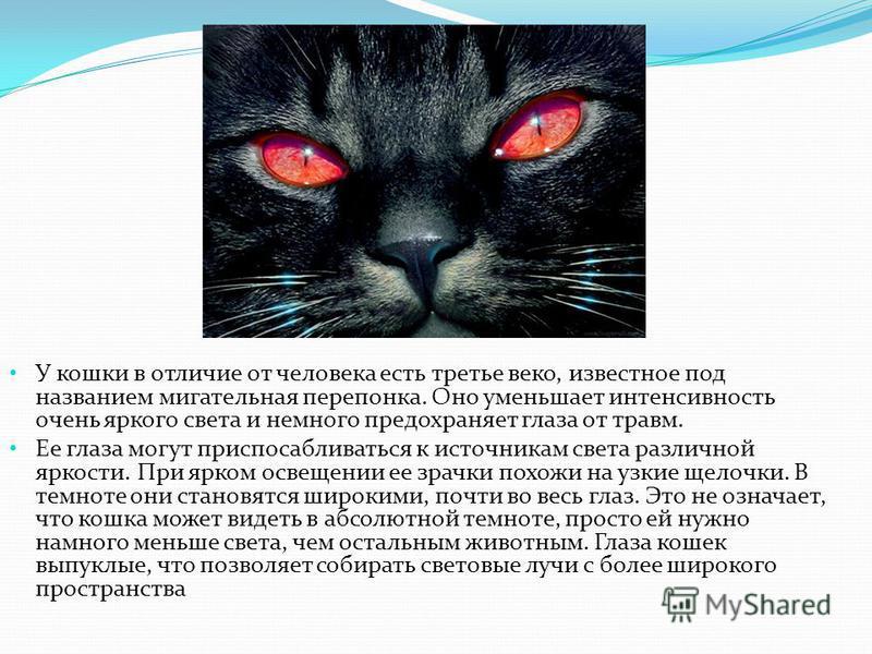 У кошки в отличие от человека есть третье веко, известное под названием мигательная перепонка. Оно уменьшает интенсивность очень яркого света и немного предохраняет глаза от травм. Ее глаза могут приспосабливаться к источникам света различной яркости