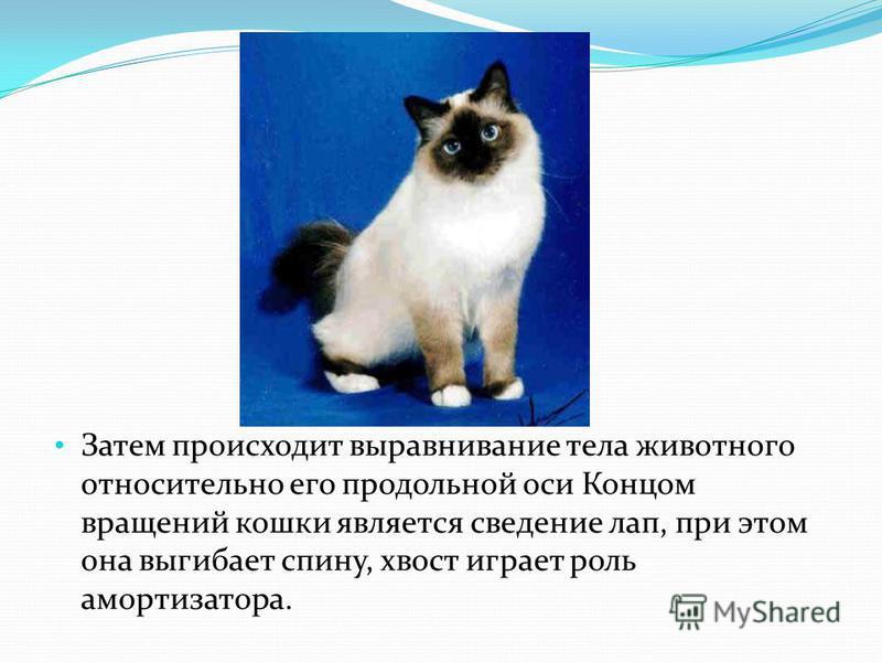 Затем происходит выравнивание тела животного относительно его продольной оси Концом вращений кошки является сведение лап, при этом она выгибает спину, хвост играет роль амортизатора.