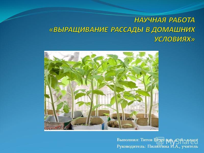 Выполнил: Титов Вячеслав, 4 «А» класс Руководитель: Пилюгина И.А., учитель