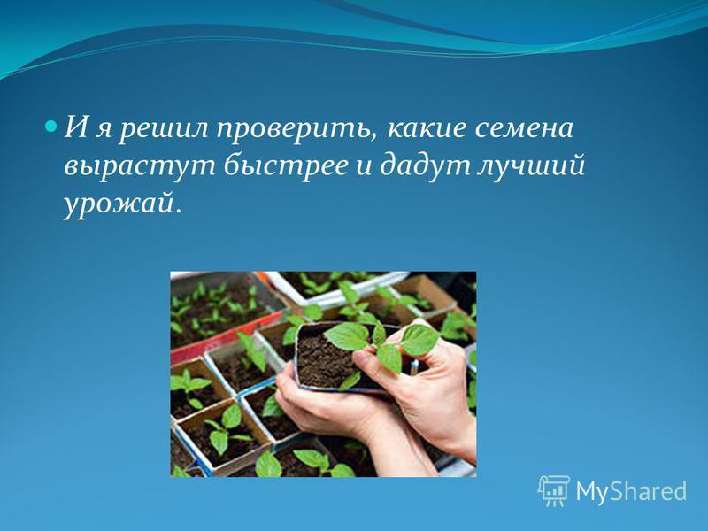 И я решил проверить, какие семена вырастут быстрее и дадут лучший урожай.