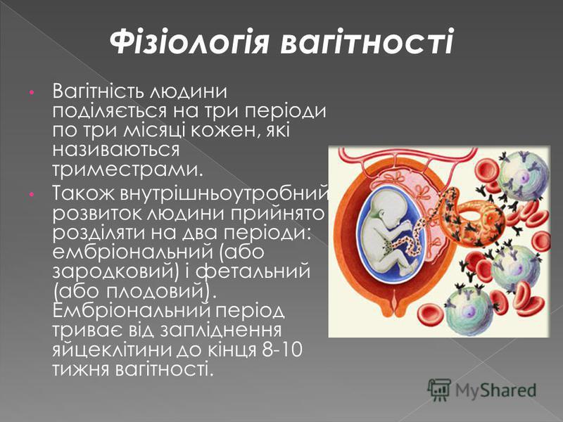 Вагітність людини поділяється на три періоди по три місяці кожен, які називаються триместрами. Також внутрішньоутробний розвиток людини прийнято розділяти на два періоди: ембріональний (або зародковий) і фетальний (або плодовий). Ембріональний період