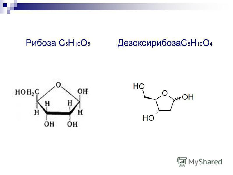 Рибоза С 5 Н 10 О 5 ДезоксирибозаС 5 Н 10 О 4