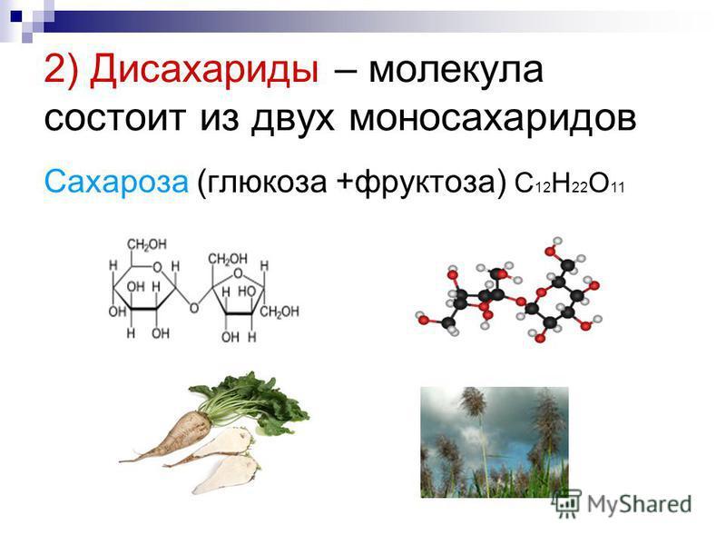 2) Дисахариды – молекула состоит из двух моносахаридов Сахароза (глюкоза +фруктоза) С 12 Н 22 О 11