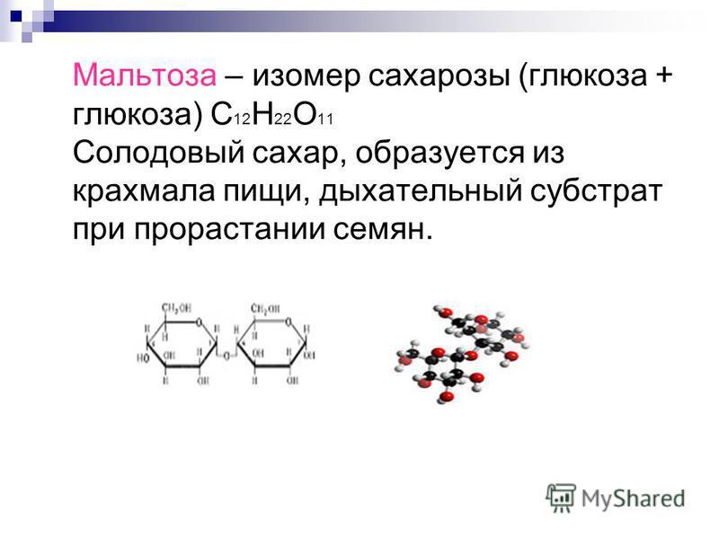 Мальтоза – изомер сахарозы (глюкоза + глюкоза) С 12 Н 22 О 11 Солодовый сахар, образуется из крахмала пищи, дыхательный субстрат при прорастании семян.