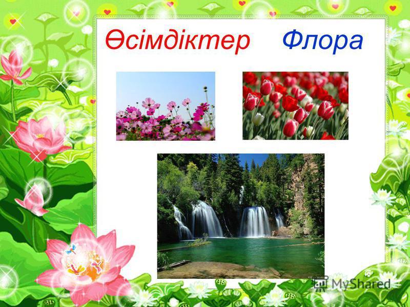 Өсімдіктер Флора