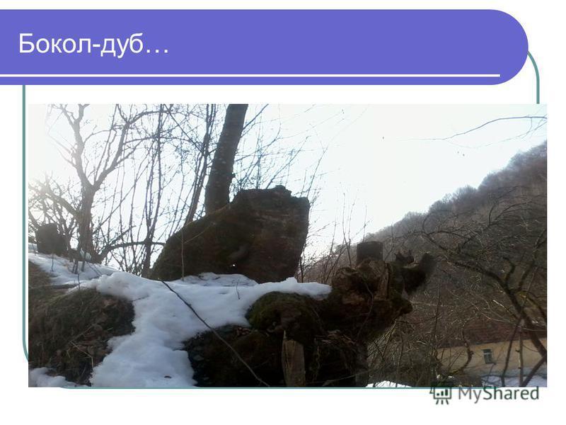 Бокол-дуб…