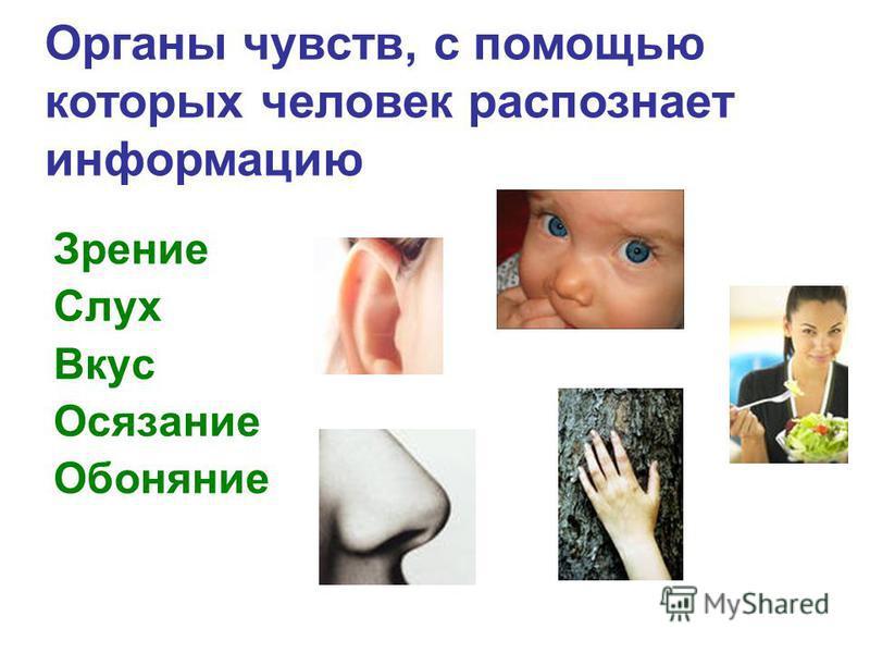 Зрение Слух Вкус Осязание Обоняние Органы чувств, с помощью которых человек распознает информацию