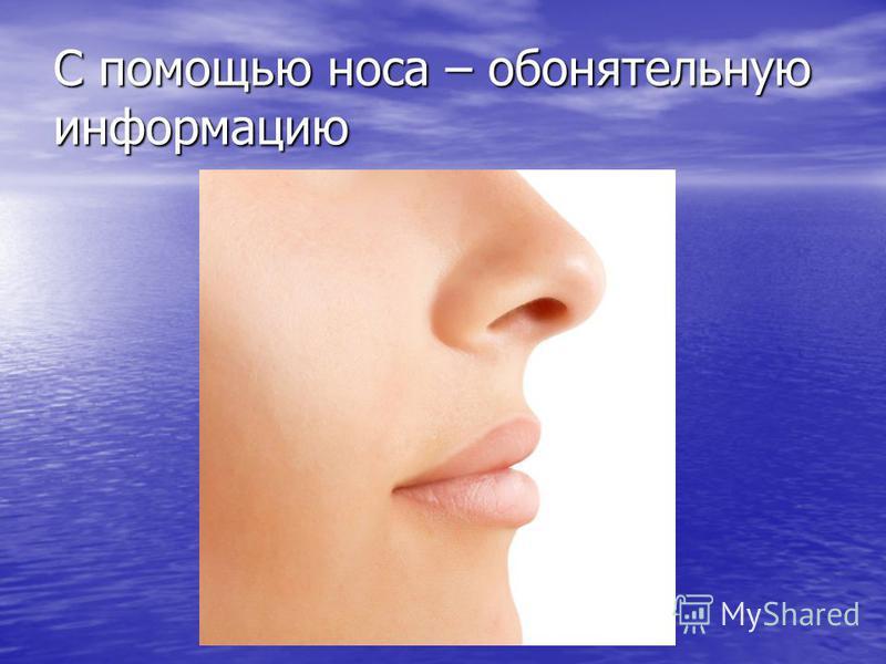С помощью носа – обонятельную информацию