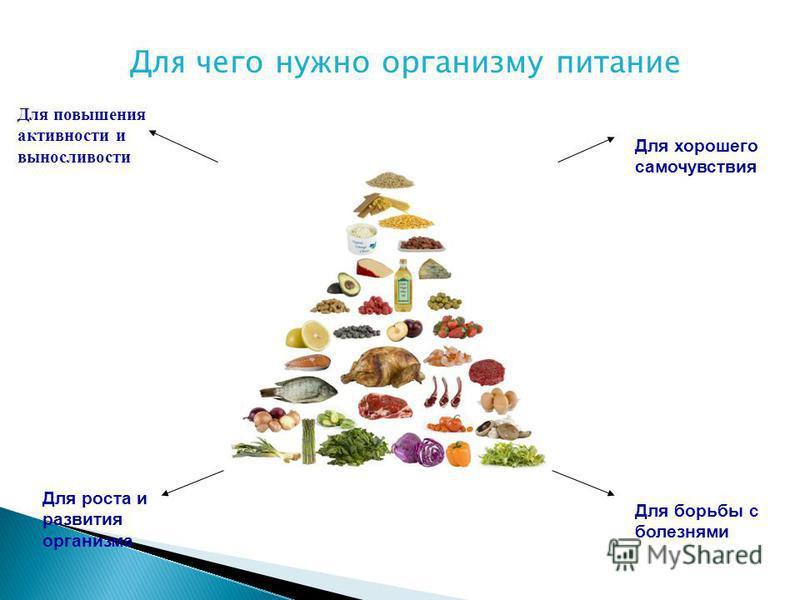 Для чего нужно организму питание Для повышения активности и выносливости Для хорошего самочувствия Для роста и развития организма Для борьбы с болезнями