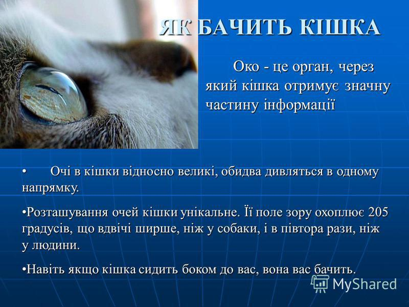 ЯК БАЧИТЬ КІШКА Очі в кішки відносно великі, обидва дивляться в одному напрямку. Очі в кішки відносно великі, обидва дивляться в одному напрямку. Розташування очей кішки унікальне. Її поле зору охоплює 205 градусів, що вдвічі ширше, ніж у собаки, і в