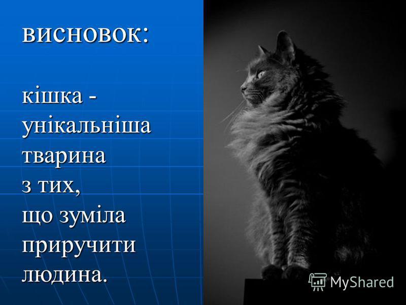 висновок: кішка - унікальніша тварина з тих, що зуміла приручити людина.
