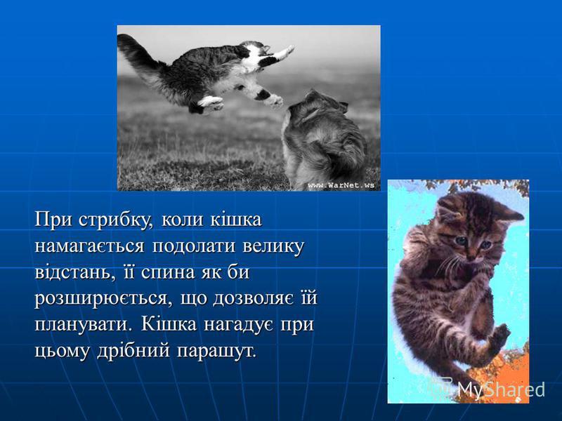 При стрибку, коли кішка намагається подолати велику відстань, її спина як би розширюється, що дозволяє їй планувати. Кішка нагадує при цьому дрібний парашут.