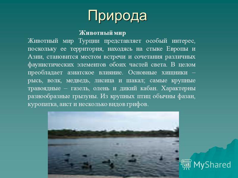 Природа Животный мир Животный мир Турции представляет особый интерес, поскольку ее территория, находясь на стыке Европы и Азии, становится местом встречи и сочетания различных фаунистических элементов обоих частей света. В целом преобладает азиатское