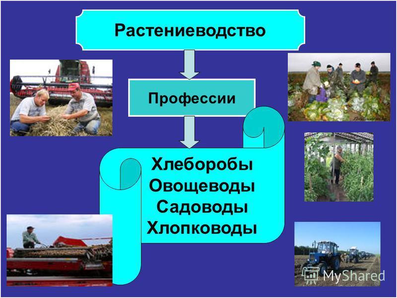 Профессии Хлеборобы Овощеводы Садоводы Хлопководы Растениеводство