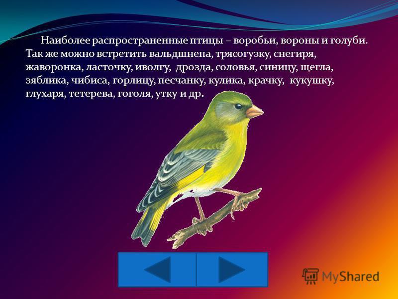 Наиболее распространенные птицы – воробьи, вороны и голуби. Так же можно встретить вальдшнепа, трясогузку, снегиря, жаворонка, ласточку, иволгу, дрозда, соловья, синицу, щегла, зяблика, чибиса, горлицу, песчанку, кулика, крачку, кукушку, глухаря, тет