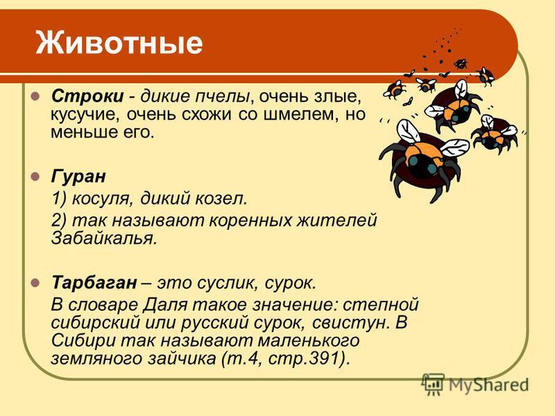 Животные Строки - дикие пчелы, очень злые, кусачие, очень схожи со шмелем, но меньше его. Гуран 1) косуля, дикий козел. 2) так называют коренных жителей Забайкалья. Тарбаган – это суслик, сурок. В словаре Даля такое значение: степной сибирский или ру