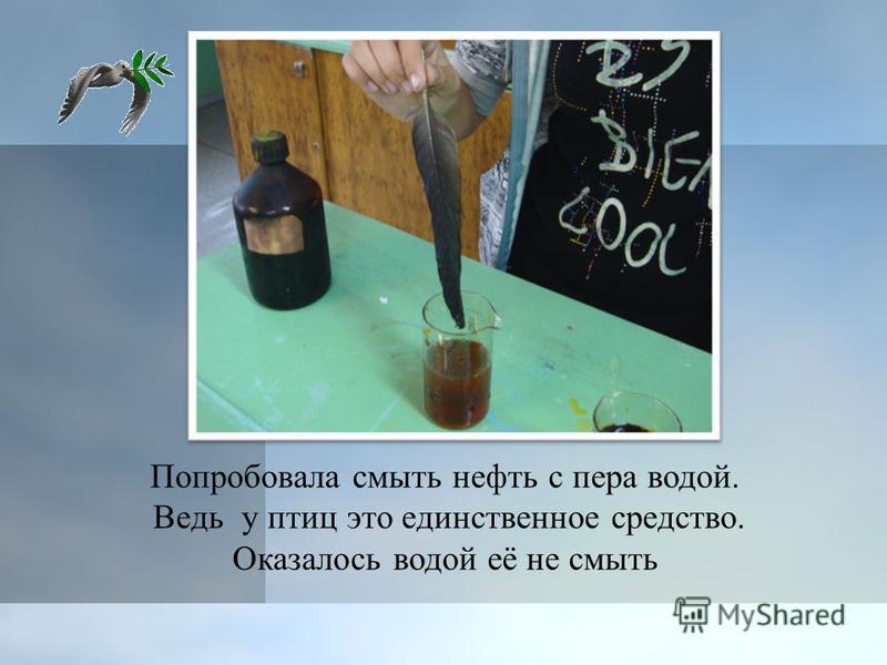 Попробовала смыть нефть с пера водой. Ведь у птиц это единственное средство. Оказалось водой её не смыть