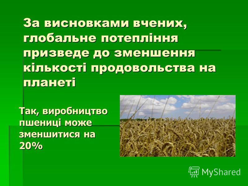 За висновками вчених, глобальне потепління призведе до зменшення кількості продовольства на планеті Так, виробництво пшениці може зменшитися на 20%