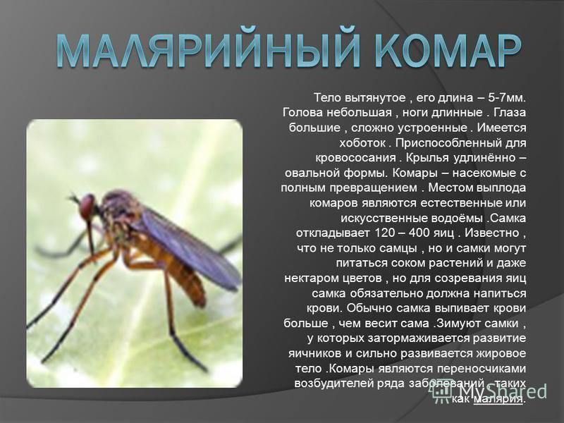 Тело вытянутое, его длина – 5-7 мм. Голова небольшая, ноги длинные. Глаза большие, сложно устроенные. Имеется хоботок. Приспособленный для кровососания. Крылья удлинённо – овальной формы. Комары – насекомые с полным превращением. Местом выплода комар