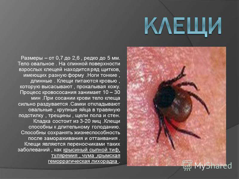 Размеры – от 0,7 до 2,6, редко до 5 мм. Тело овальное. На спинной поверхности взрослых клещей находится ряд щитков, имеющих разную форму.Ноги тонкие, длинные. Клещи питаются кровью, которую высасывают, прокалывая кожу. Процесс кровососания занимает 1