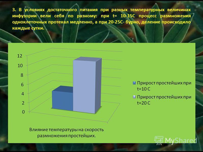 3. В условиях достаточного питания при разных температурных величинах инфузории вели себя по разному: при t= 10-15С процесс размножения одноклеточных протекал медленно, а при 20-25С- бурно, деление происходило каждые сутки.