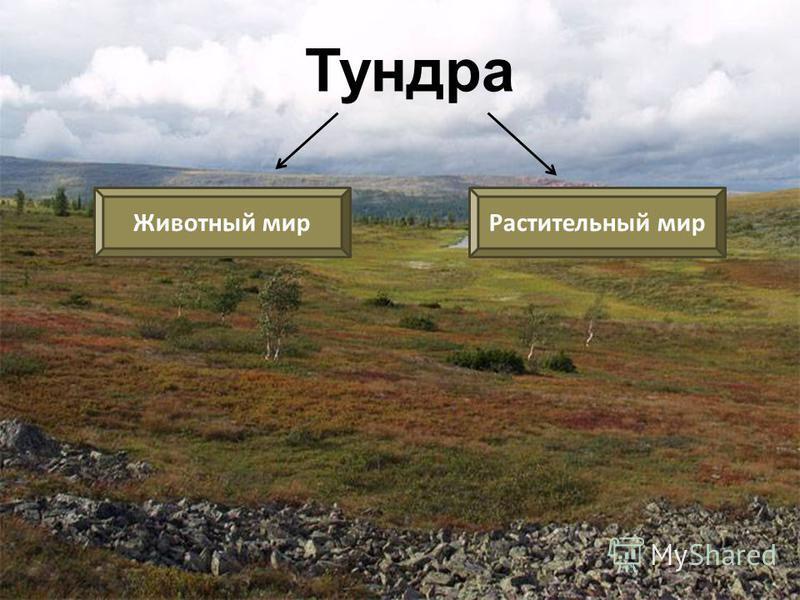 Растительный мир Арктики