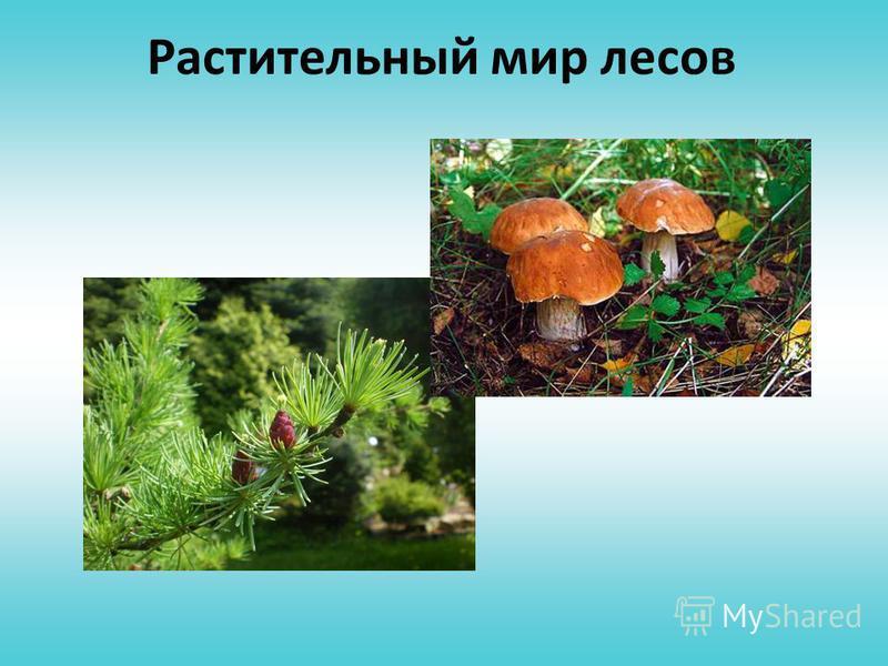 Зона лесов Животный мир Растительный мир