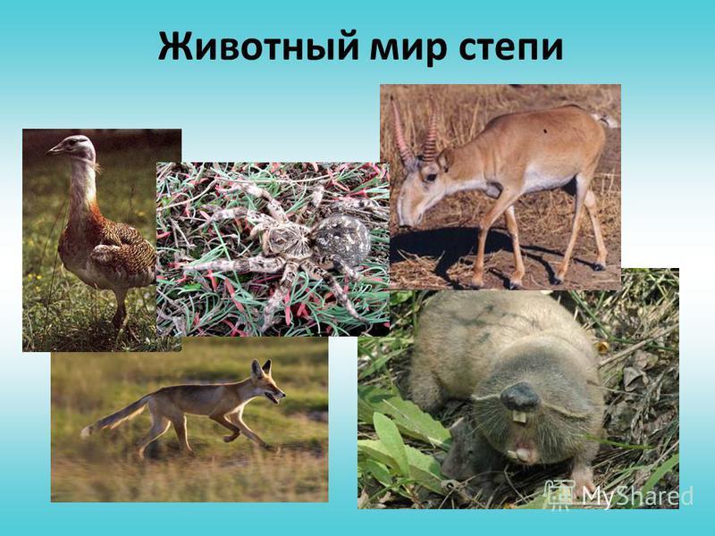Зона степей Животный мир Растительный мир