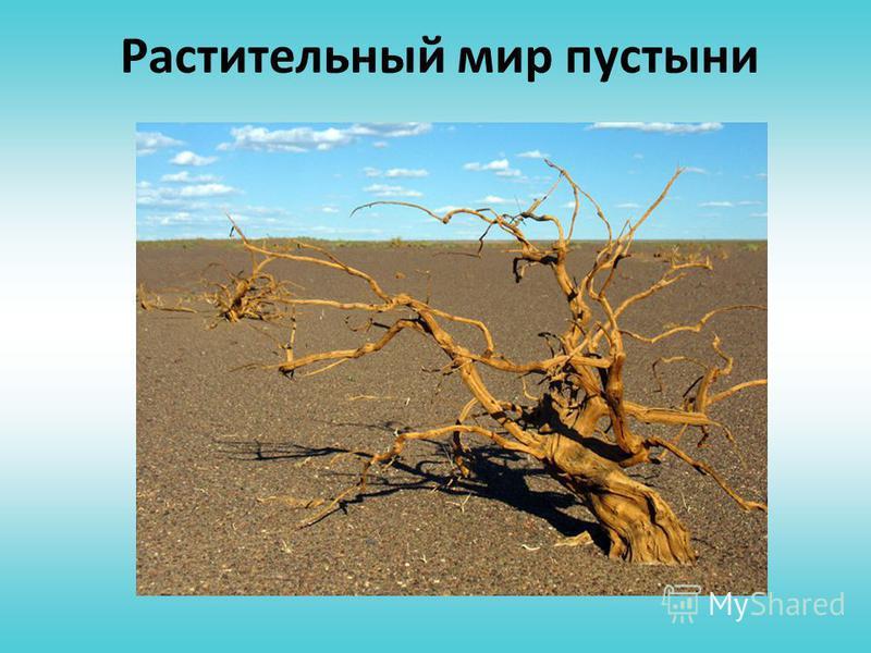 Животный мир пустыни